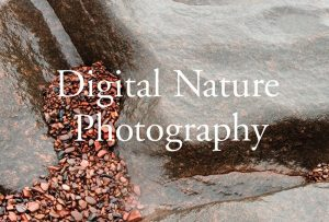 "Title page of ""Digital Nature Photography"" book, featuring photography of Craig Blacklock's students of Split Rock arts program; graphic design by Carolyn Porter of Porterfolio, Inc."