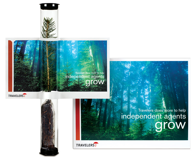 Tree seedling in plastic tube and brochure from Travelers Insurance with images of tall trees; brochures talks about how Travelers helps agents grow. Graphic design by Carolyn Porter of Porterfolio, Inc.